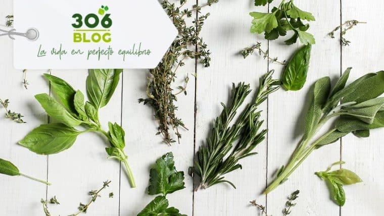 Planifica tu herbario con las mejores Hierbas Medicinales